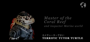 Terrific Tutor Turtle ID